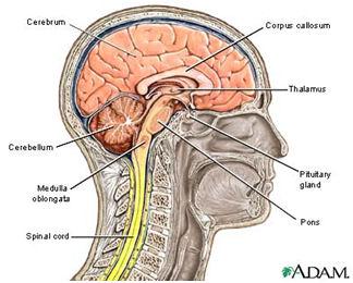 Hipoglicemia si Alzheimer